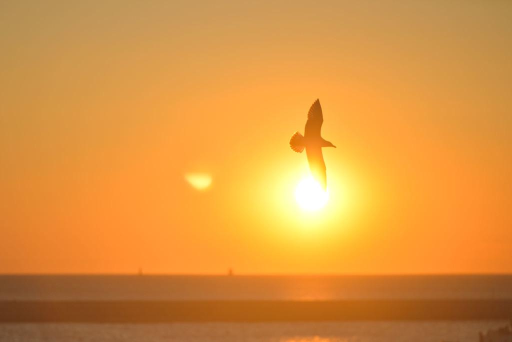 co je imag birdsunset-bird-sunrise-animal